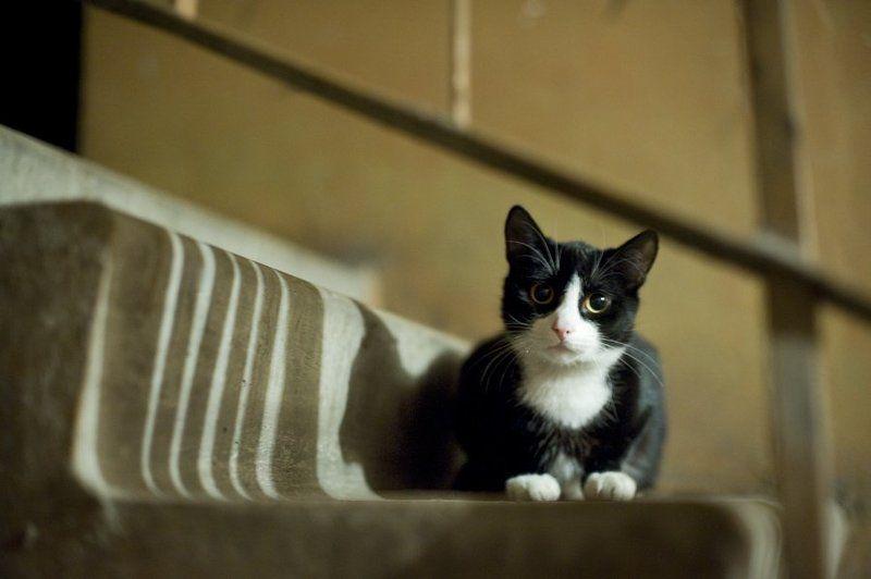 кот,время,жизнь,животные,свет,тень Мне баллы не нужны, мне бы погретьсяphoto preview