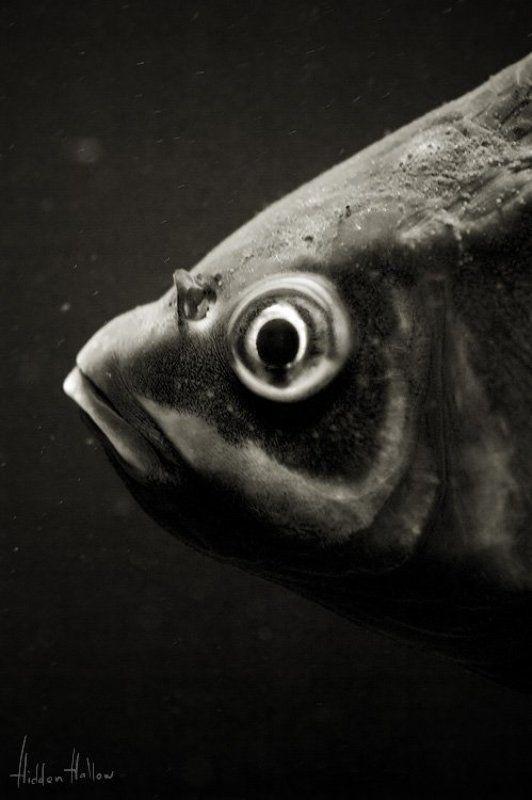 Портрет рыбыphoto preview