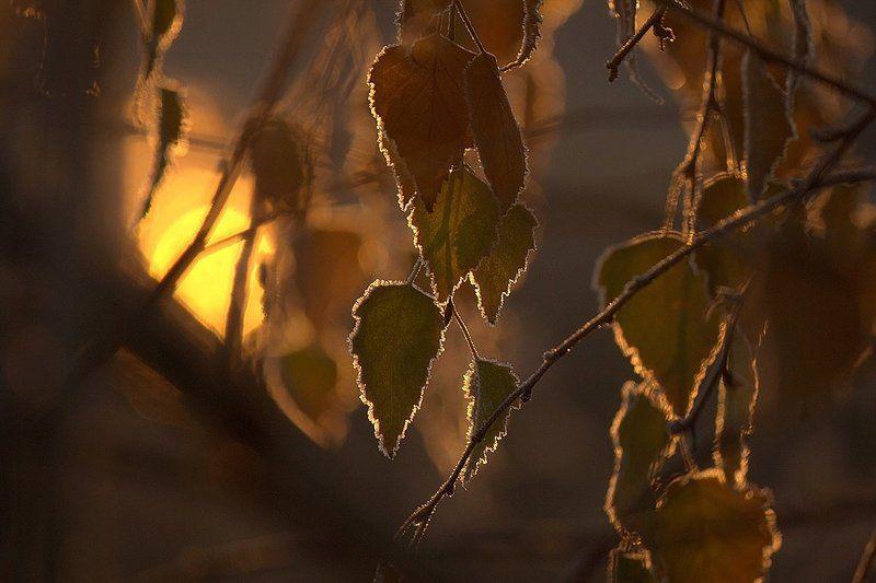 Листья. Осень. Листья уходящей осени.photo preview