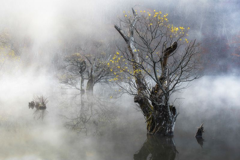 Autumn, Fog, Jusanji, Korea, Life, Mist, Morning, Nature, Reflection, Tree, Willow Tree of lifephoto preview