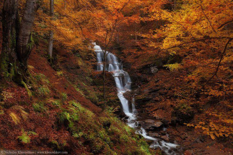 Водопад, Карпаты, Лес, Осень, Пейзаж, Украина Сокрытое в листвеphoto preview