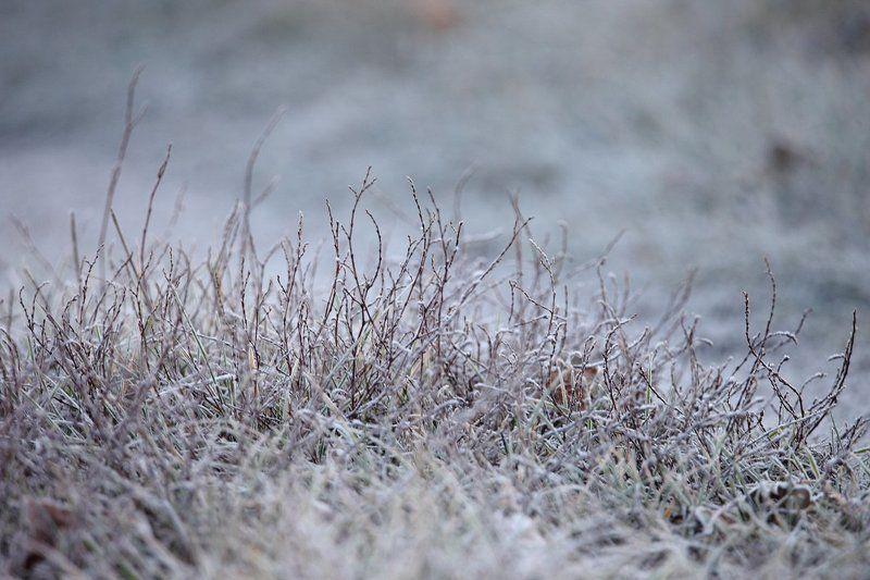 Дер. Шилово, Заморозки, Красивая Меча, Ноябрь 2015, Осень поздняя, Утро Морозным утречкомphoto preview
