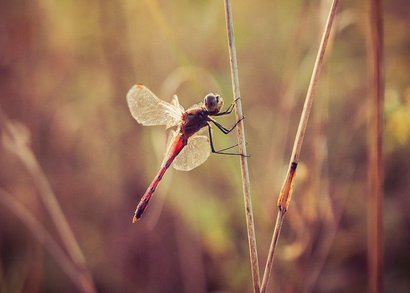 ...dragonfly...photo preview