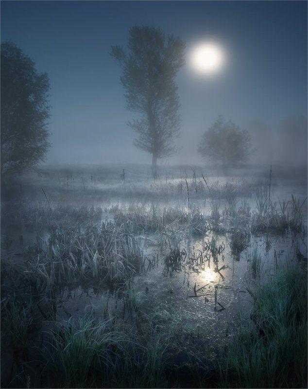 болото, камыш, луна, ночь, туман Полнолуние на болотеphoto preview