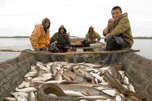 ханты ловят рыбу