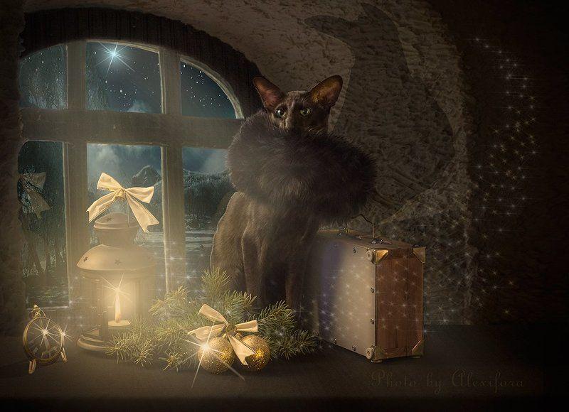 Новогоднее волшебствоphoto preview