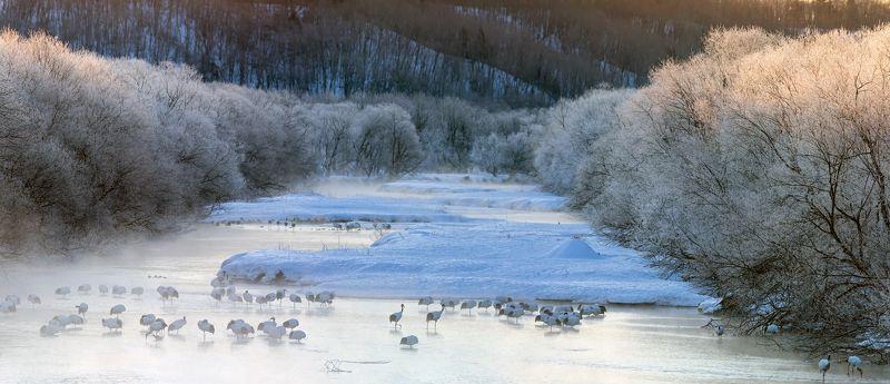 журавли, река, япония Морозное утро, река, журавли.photo preview