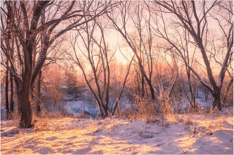 утро морозноеphoto preview