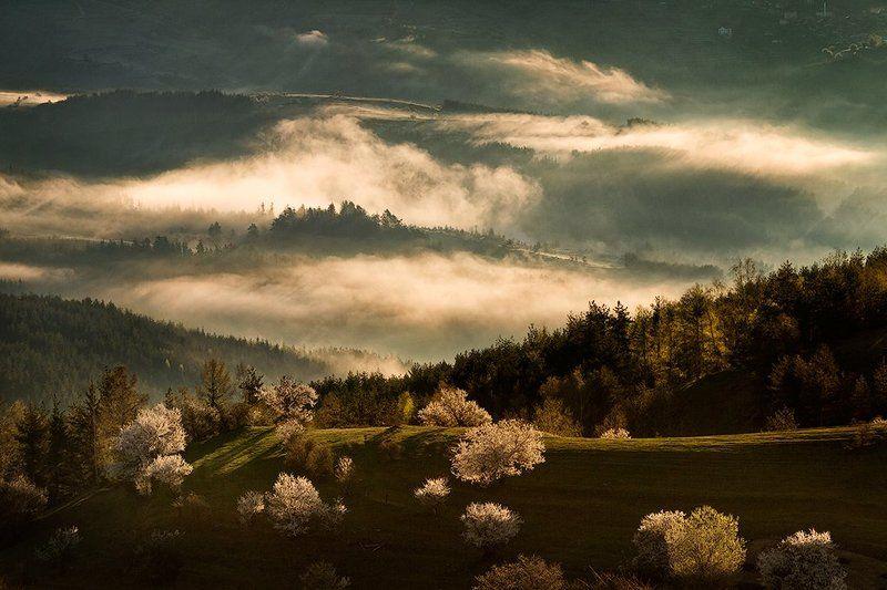 весна, гора, разсвет, родопи, тумань, утро Встреча с утромphoto preview