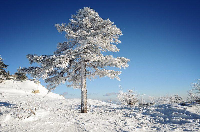 сихотэ-алинь, ливадийский, хребет, горы, ель, дерево, иней, приморье, приморский, дальний восток, дальневосточный В лесу она рослаphoto preview
