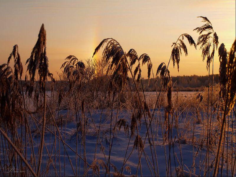 закат, гало, зима, пейзаж В камышах.photo preview