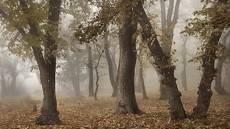 Тихо осень наступает.
