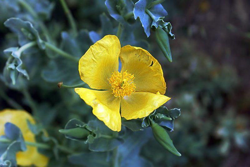 цветы Разнообразие видов и законы привлекательностиphoto preview