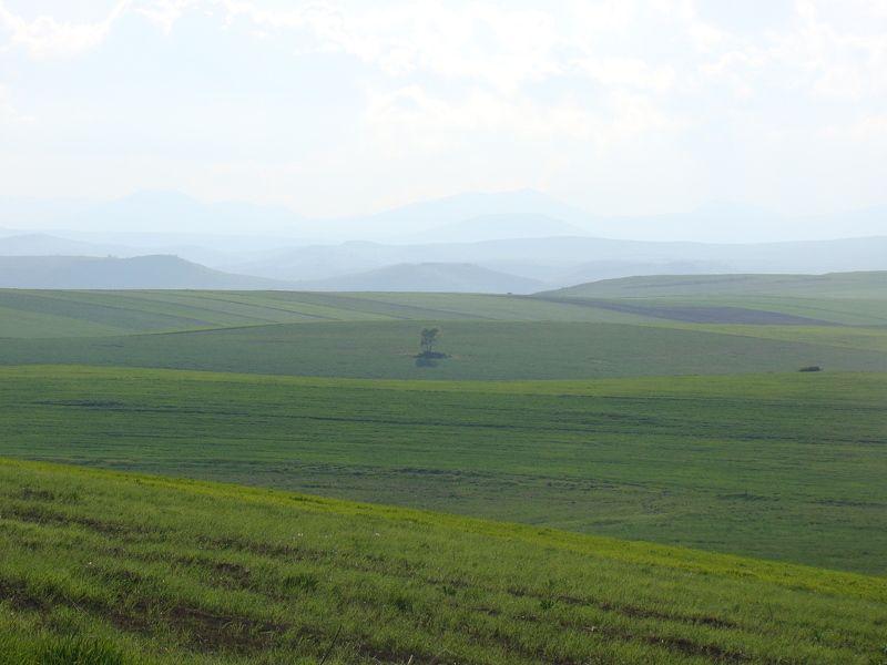 David, Armenia