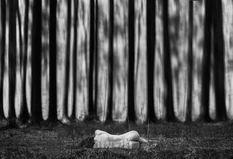 лес, девушка, природа, уединение, Лес Тенгуphoto preview