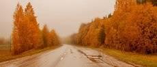 желтая дорога