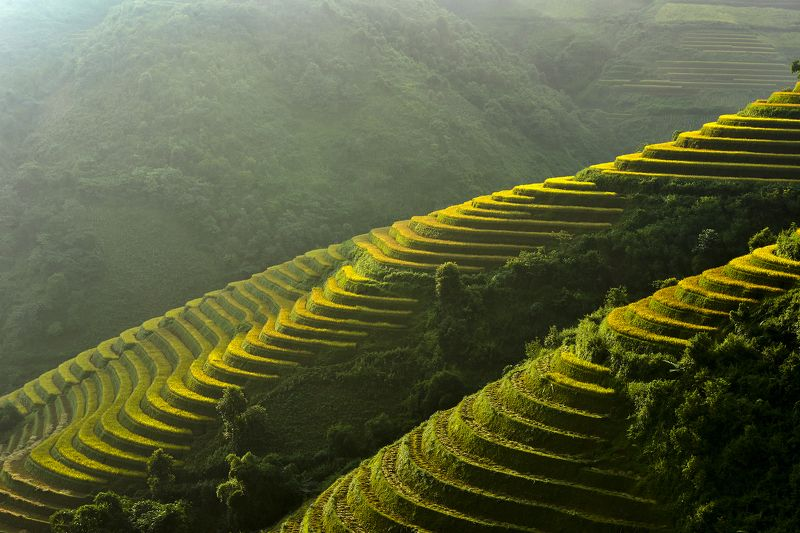 Asia, Asian, Field, Paddy, Rice, Terraces rice field terrace rice fieldphoto preview