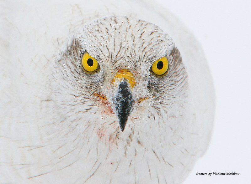 Смотри мне в глаза.  Look into my eyes.photo preview