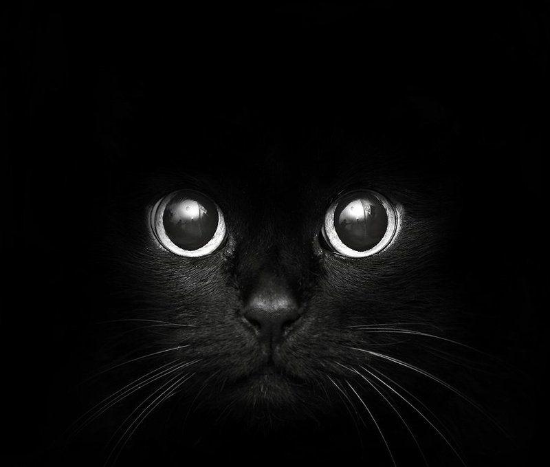 черная кошка...photo preview