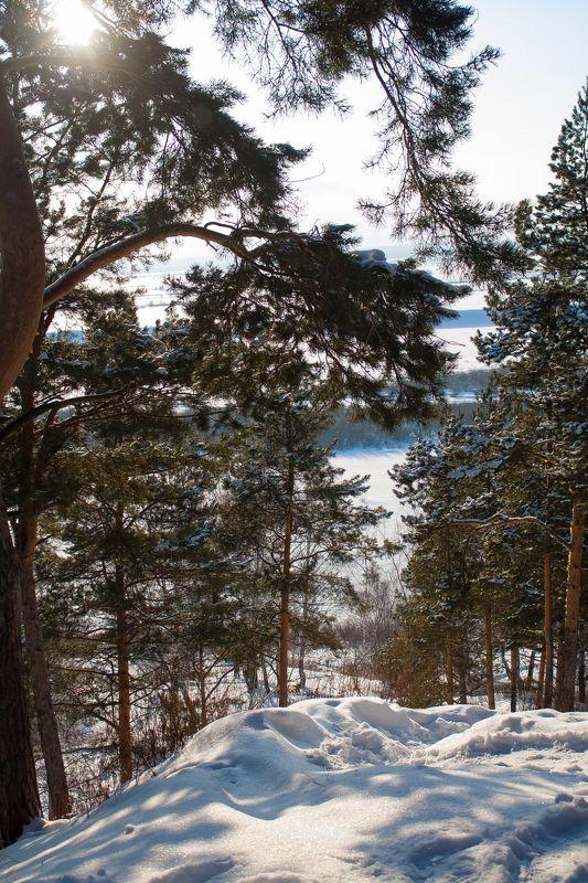 Ammi, Russia