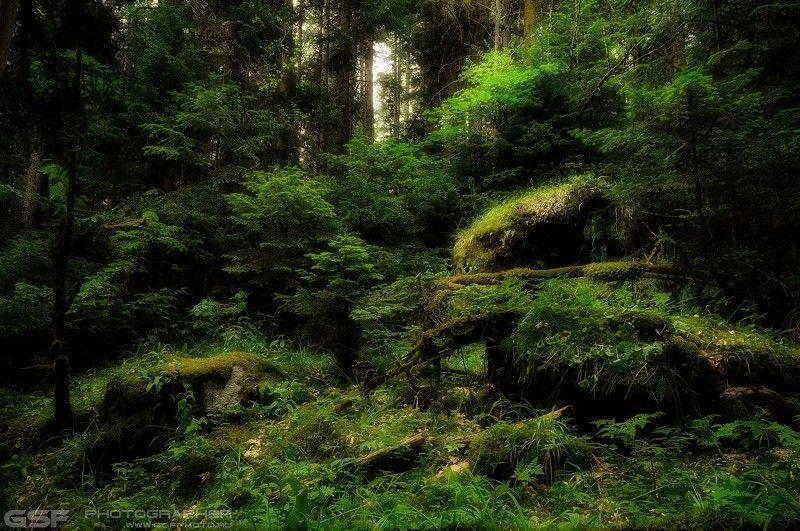 Природа Лес Деревья Зелень Листва Лето Про дебриphoto preview