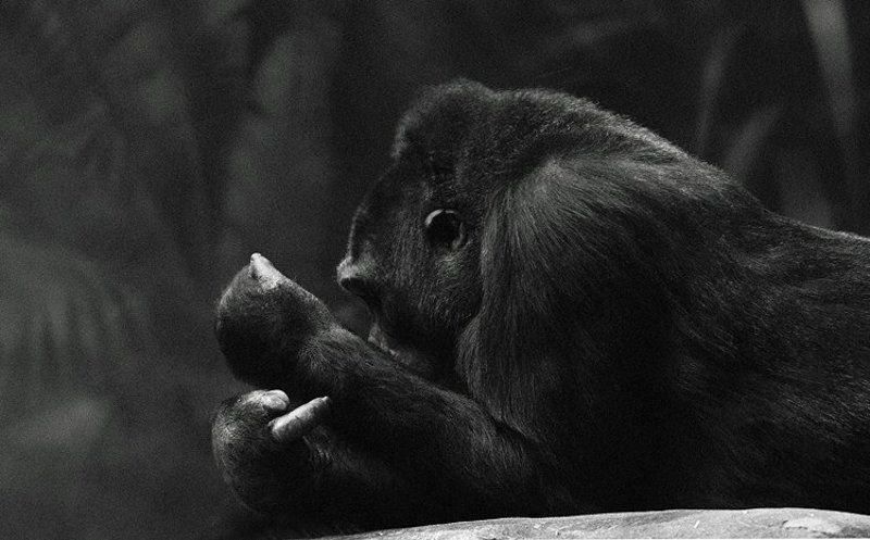 «Наш ответ Чемберлену»photo preview