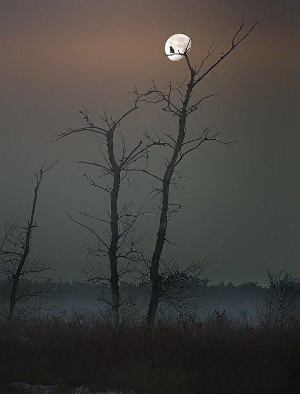 Луна,  дерево,  ворон.photo preview