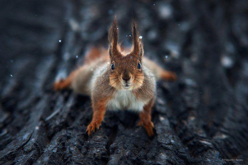 Белка, Зима, Снег ***photo preview