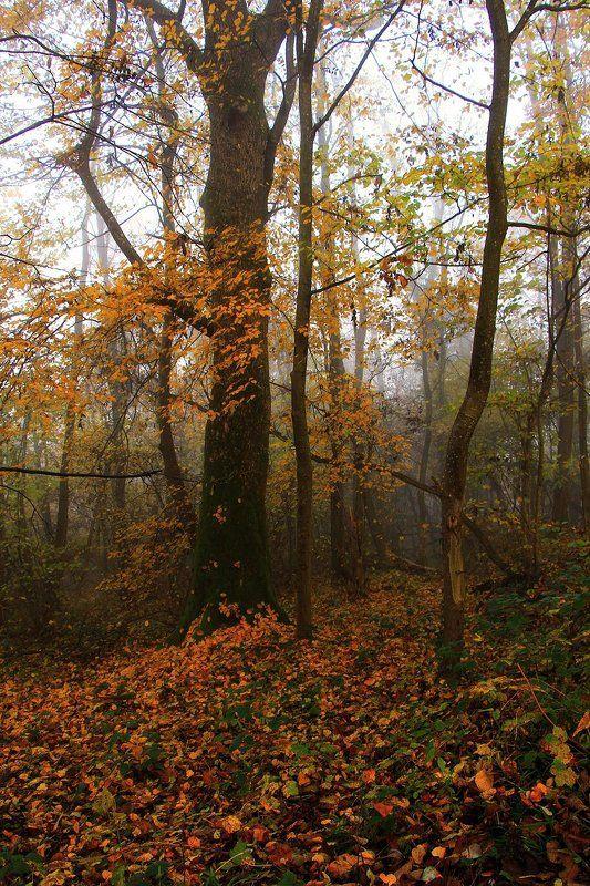 осень **photo preview