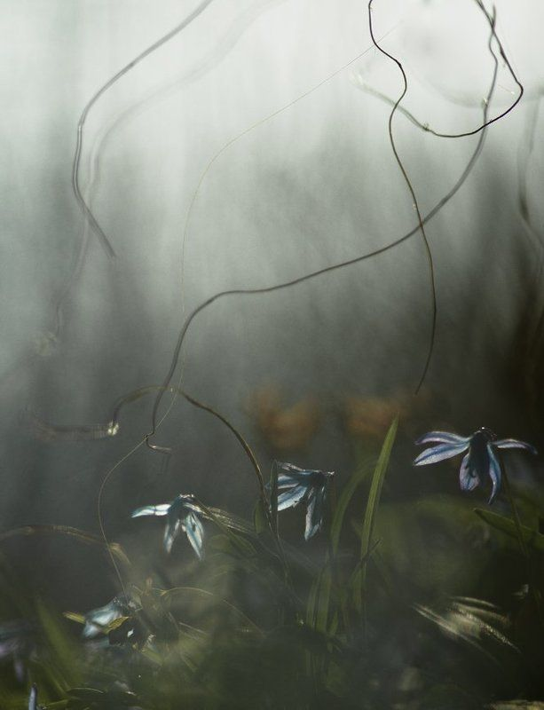 апрель, весна, воронеж, марионетки, первоцвет, пролеска, свет Марионетки...photo preview
