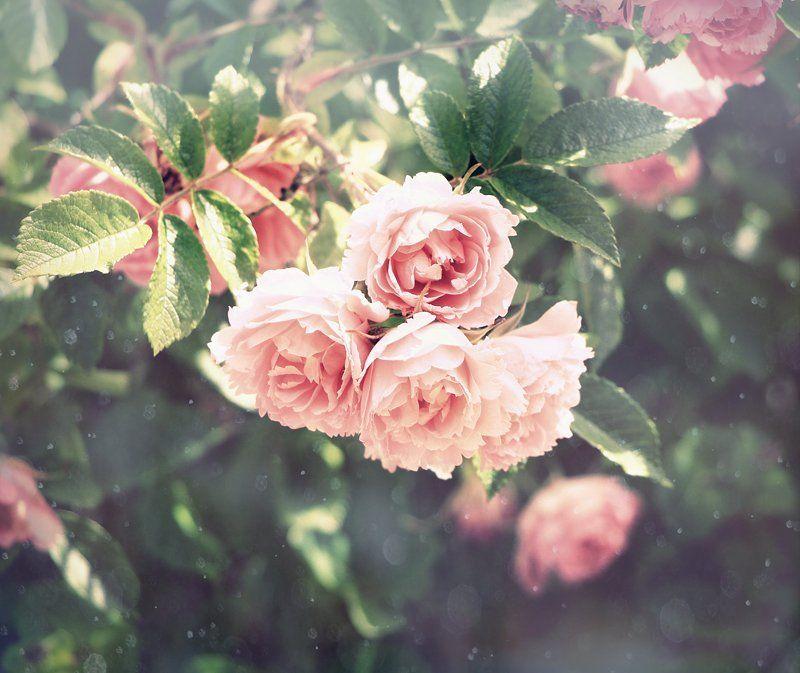 весна Весеннее..photo preview