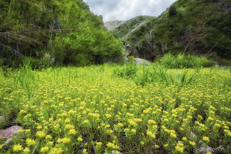 горы весна зелень цветы Кыргызстан тяньшань mountains spring green flowers Kyrgyzstan Tianshan Малиновое ущелье. Кыргызстанphoto preview