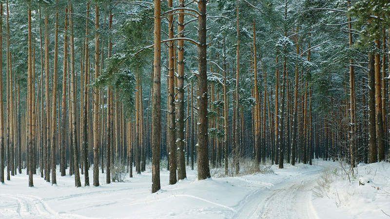дорога, лес зима, снег сосны Изумрудные фантазииphoto preview