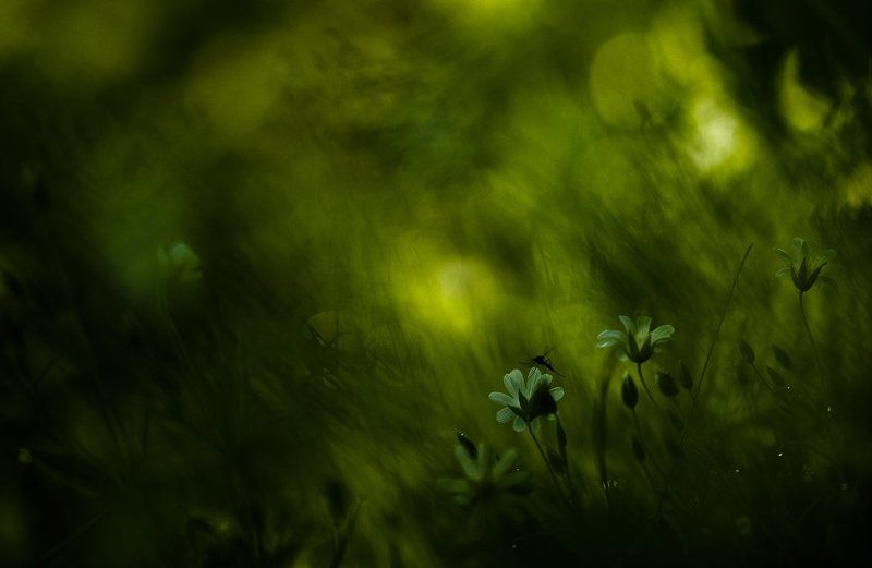 Воронеж, Карл цейс, Комарик, Макро, Свет, Утро, Цвет, Цветочки С комариком...photo preview