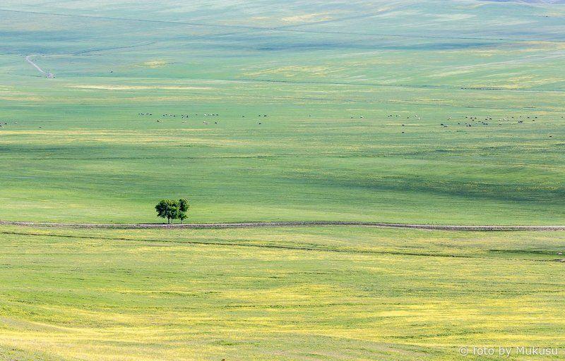 грузия, кахети, путешествия,равнина, холмы, кавказ, пейзаж На просторах Кахети.photo preview
