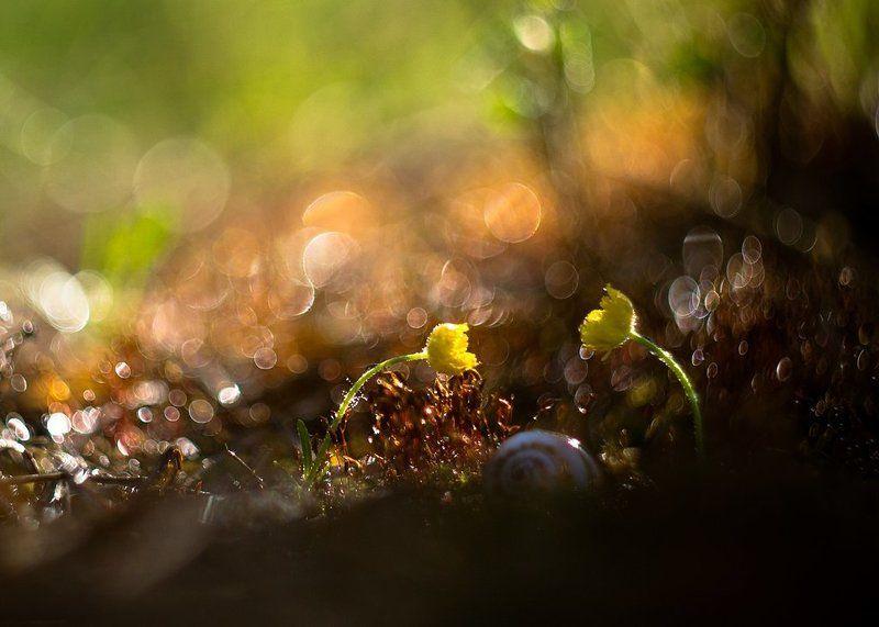 макро,цветы, мыphoto preview