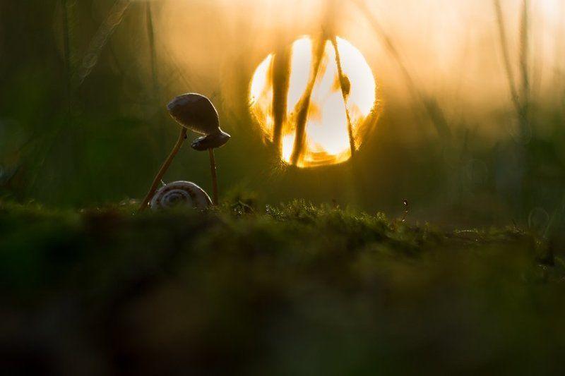 грибы Грибной рассветphoto preview