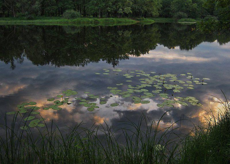 тихий вечер, июль, заводь, отражение, кубышки, берег, травы тихая заводьphoto preview