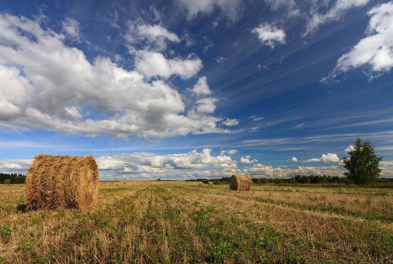 Поле трава сено рулоны лес облака лето Природные линииphoto preview