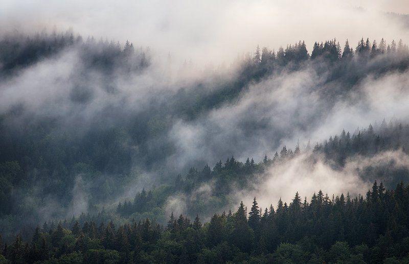 Карпаты, Лес, Туман Дыхание чащиphoto preview