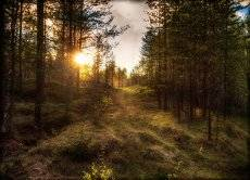 Путь к солнцу.