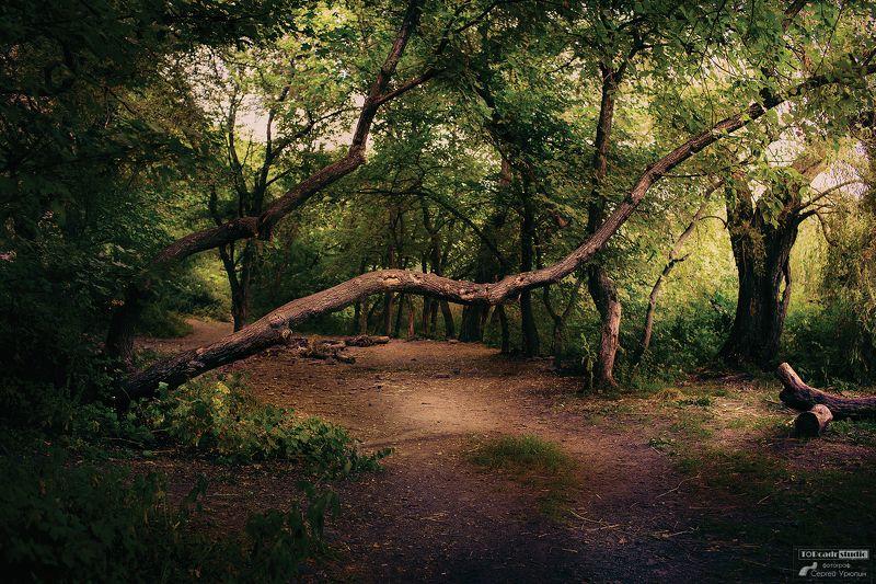Дерево на тропинкеphoto preview