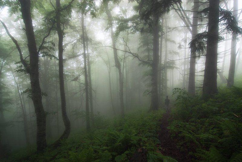 Туманные дебриphoto preview