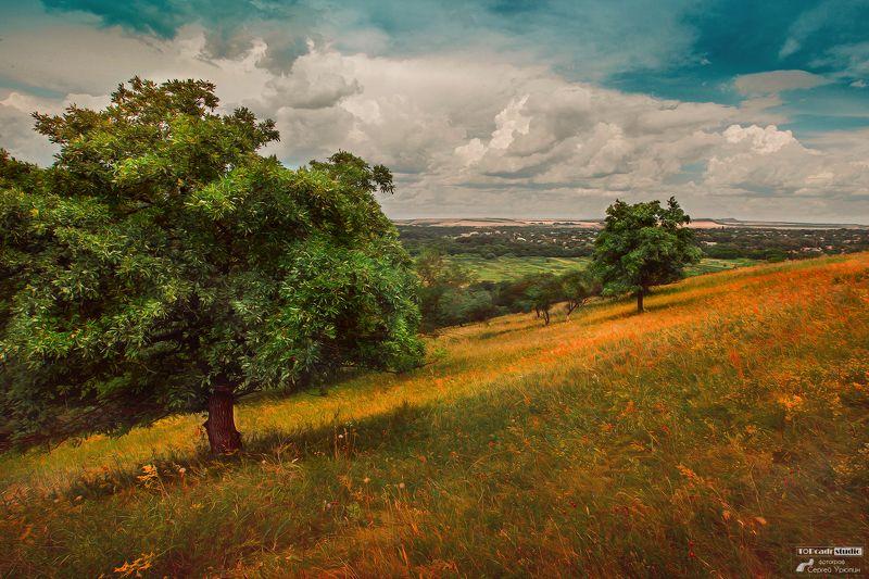 Деревья на теплом ковреphoto preview