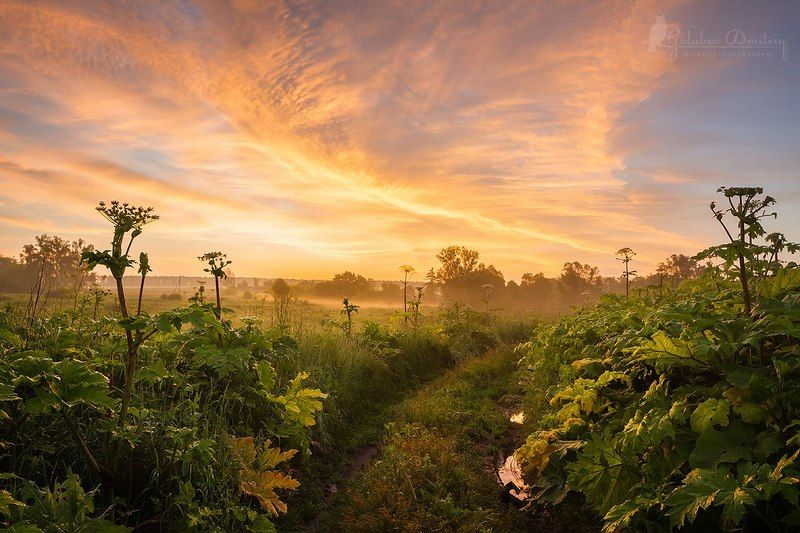 landscape, morning, sunrise, sky, clouds, plants, red, field, поле, рассвет, борщевик, утро Рассвет на поле борщевиковphoto preview