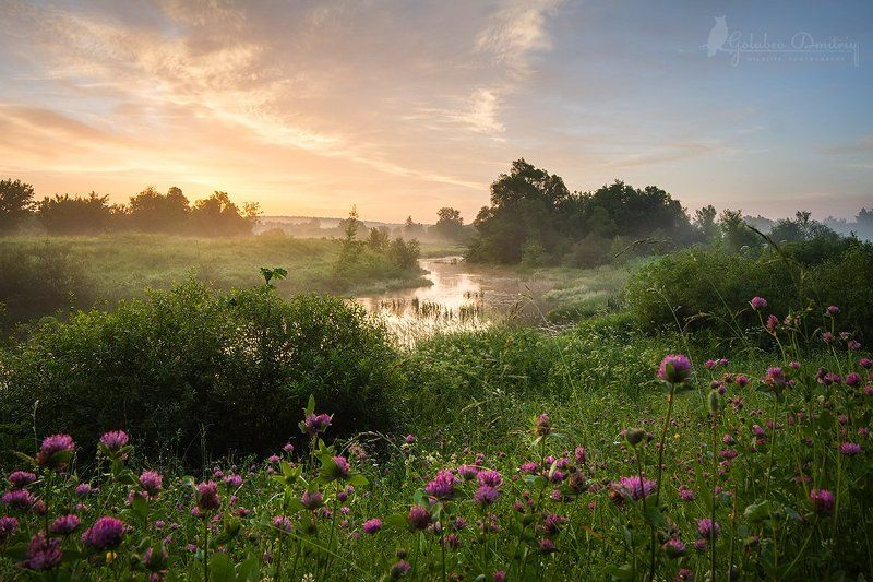 landscape, clover, morning, sky, meadow, trees, river, fog, sunrise, green, summer,пейзаж, утро, восход, река, клевер, туман, небо Восход с клеверомphoto preview