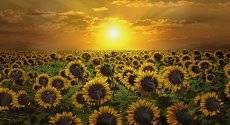 Солнце встречают.