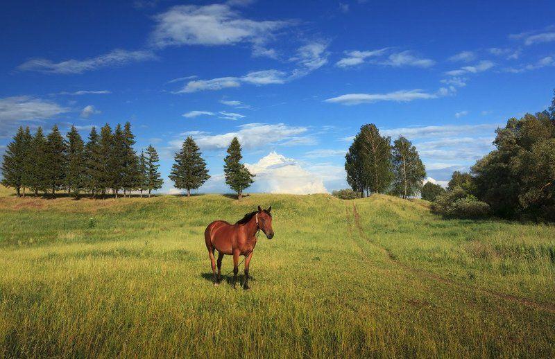 Поле трава лошадь деревья лес облака лето Пейзаж с лошадкойphoto preview