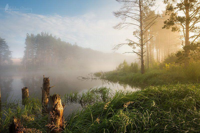 morning, summer, lake, fog, sun, sunset, trees, grass, утро, туман, рассвет, озеро, деревья туманное утроphoto preview