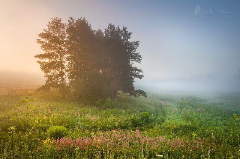 morning, sunrise,  dawn, sun, fog, pines, meadow, field, grass, утро, поле, луг, туман, рассвет, трава, сосны Луг, поле и туманное утроphoto preview